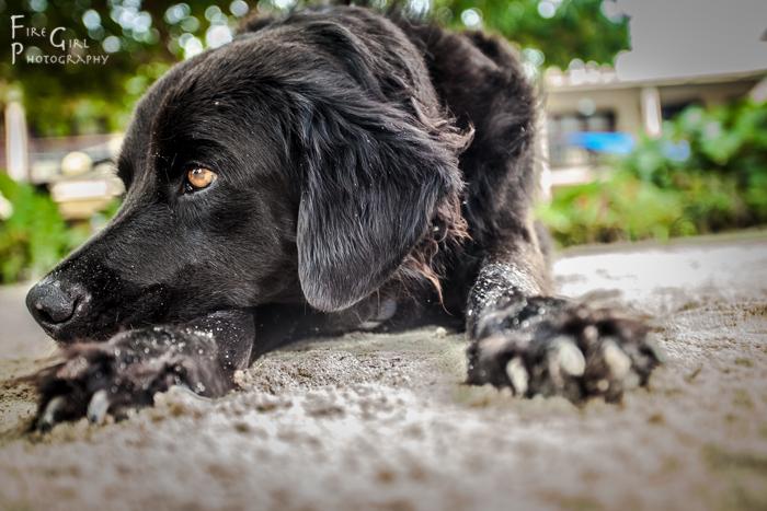 Max the guard dog / greeter.