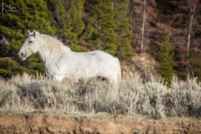 Ranch land companionship.