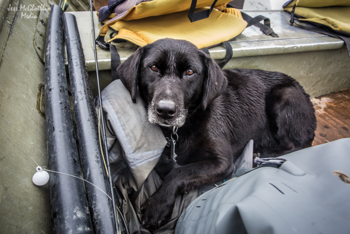 Sage—handwarmer, camera guard, ballast, and all around awesome boat buddy. Good News River, Alaska.